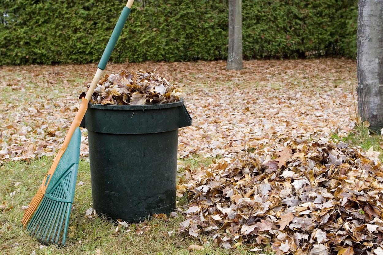 image of bin, rake, and leaves in yard to show yard waste